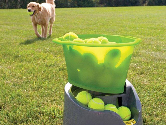 Go Dog Go – Seu cachorro e a bolinha