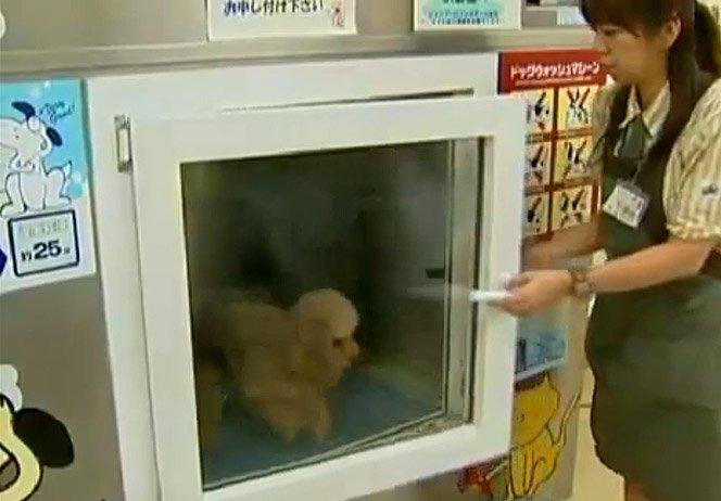 Máquina de lavar cachorro