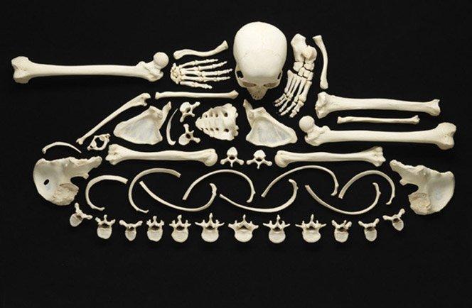 Arte feita com ossos humanos