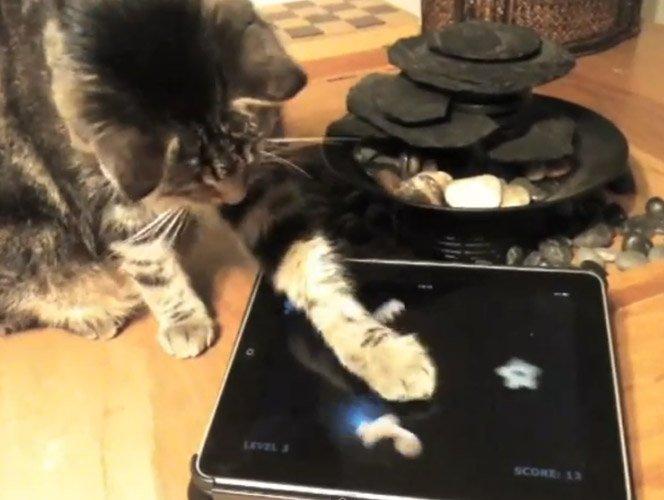 Jogo de iPad para Gatos