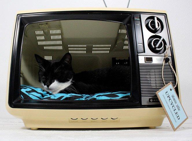 TV Retrô vira cama para Gatos