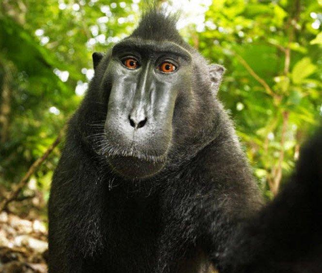 Macaco rouba câmera de fotógrafo e tira foto de si mesmo