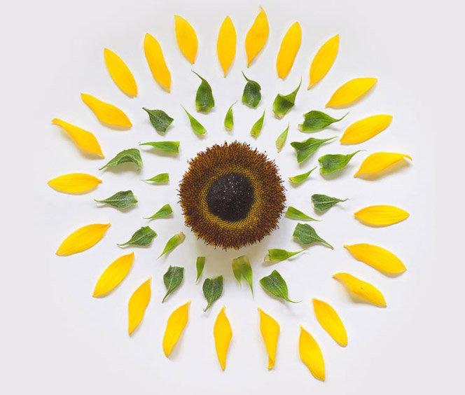 Explosão de flores, projeto fotográfico lindo
