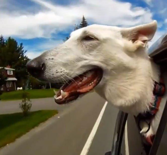 Cães na Janela . 5 minutos de pura felicidade