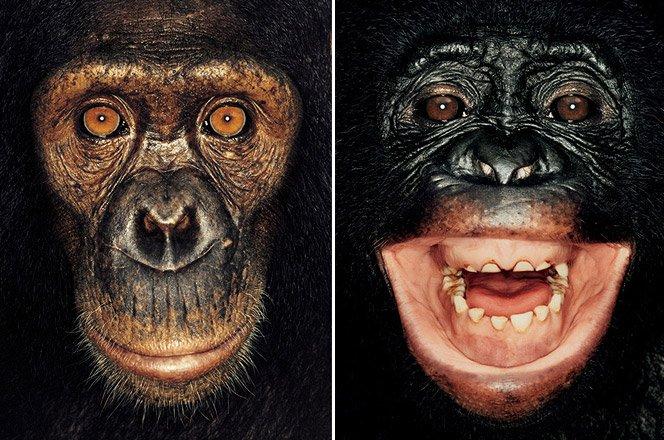 Macacos quase humanos