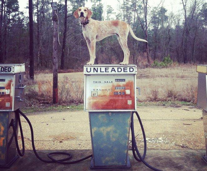 Cachorro equilibrista em ensaio fotográfico divertido