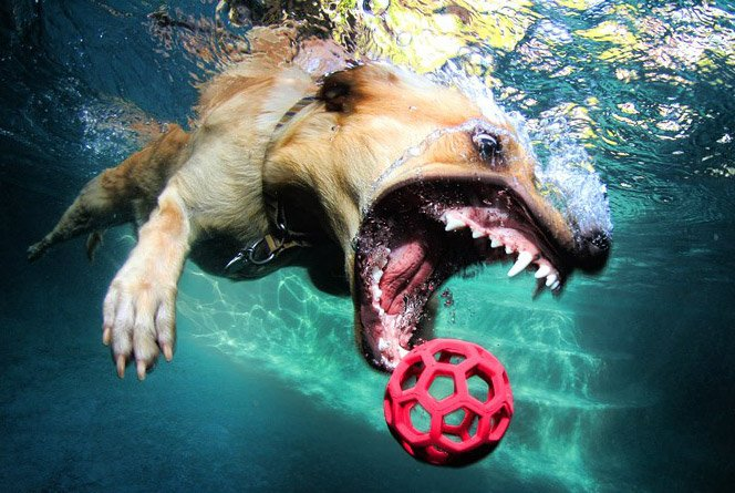Cachorros mergulhadores em ensaio fotográfico