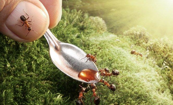 A sociedade das formigas retratada de perto sem Photoshop