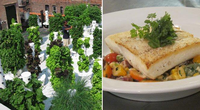Restaurante usa o que produz em horta no telhado