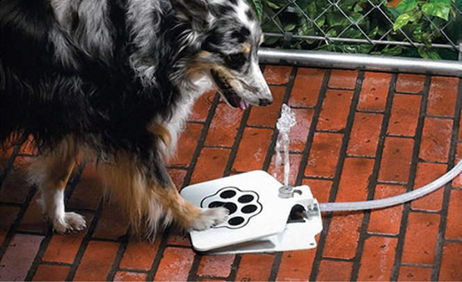 Bebedouro para cachorros