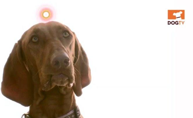 O primeiro canal de TV com programação exclusiva para cães