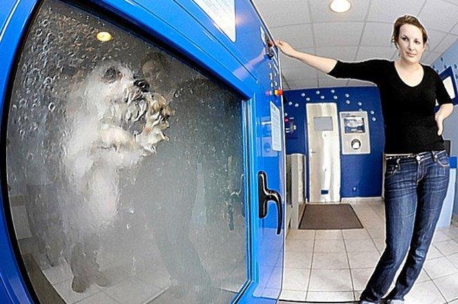 Lavanderia de cachorros