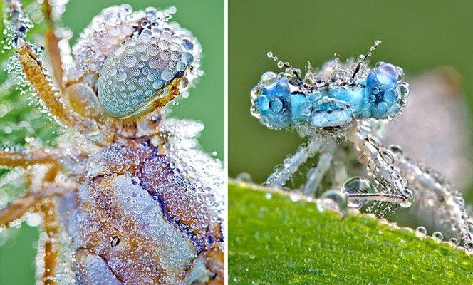 Ensaio incrível com fotos macro de insetos e gotas de água