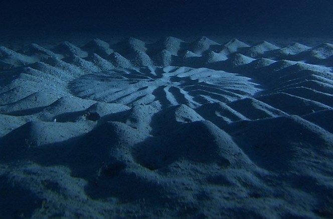 Peixe artista cria esculturas de areia no fundo do oceano
