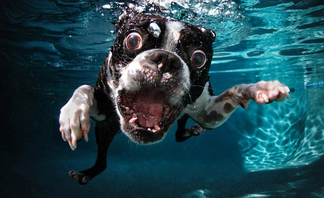 Veja as novas fotos da série Underwater Dogs