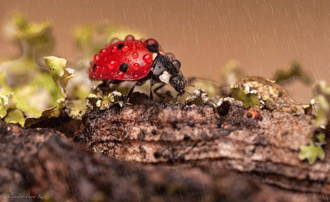 Como uma joaninha se sente num dia de chuva