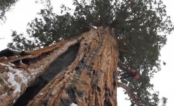 Como fotografar a segunda maior árvore do mundo