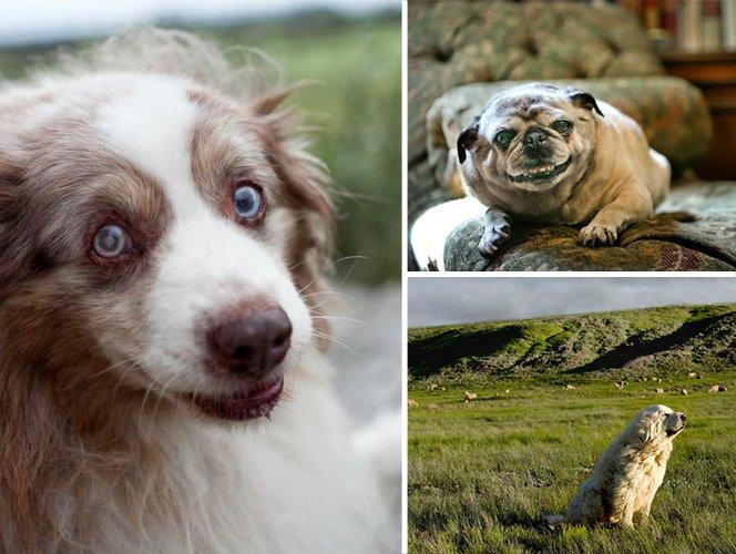 Fotógrafa viaja registrando cães idosos e suas expressões quase humanas