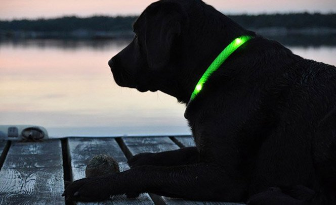 Coleira que brilha no escuro para passear com o cachorro de noite