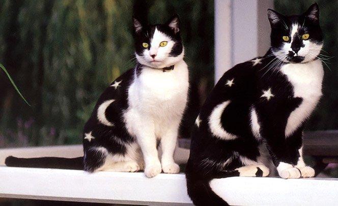 Livro reúne série de fotos com gatos pintados