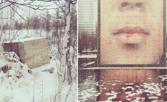 Desafio – encontre o Border Collie escondido nas fotos