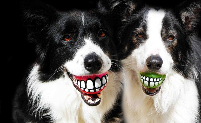 A bolinha mais divertida que você poderia dar para seu cachorro tem multifunções