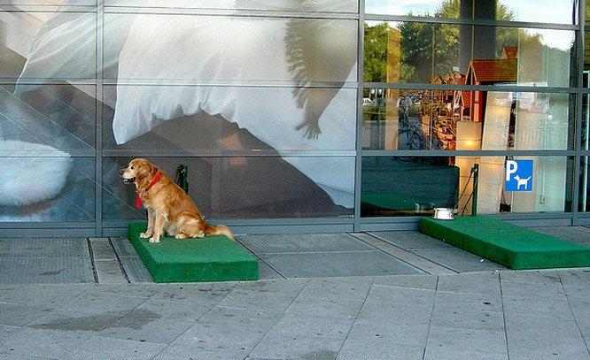 IKEA oferece estacionamento para cachorros esperarem seus donos