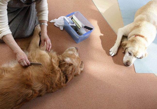 Asilo de cães-guias no Japão dá um resto de vida digna aos cães 'cuidadores'