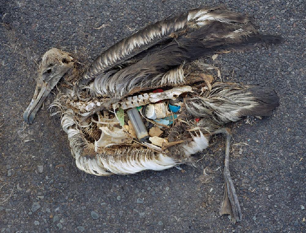 Série fotográfica mostra que o nosso lixo vai parar dentro dos animais