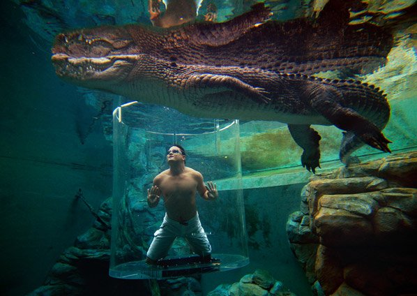 Você toparia mergulhar com crocodilos protegido por 1 caixa de vidro de 12cm?