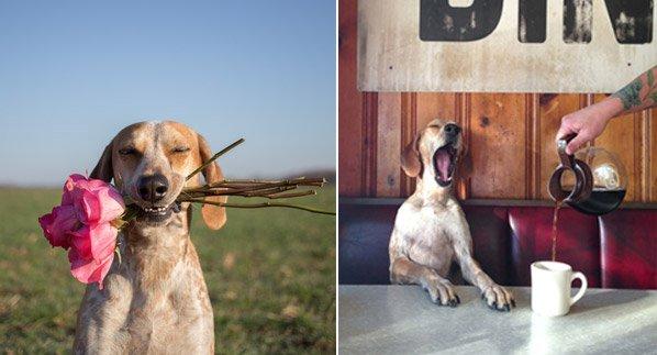 O retorno de Maddie – a cachorra mais carismática de todos os tempos