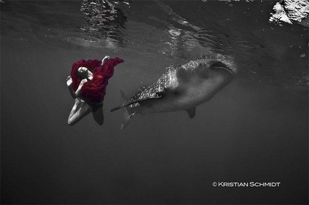 WhaleSharks1