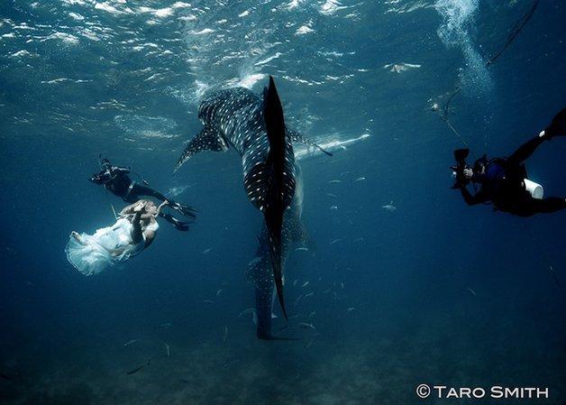 WhaleSharks10