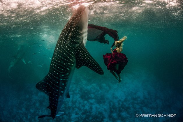 WhaleSharks3