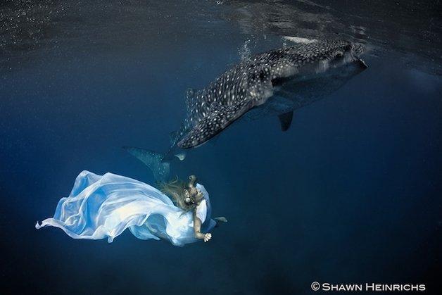 WhaleSharks4