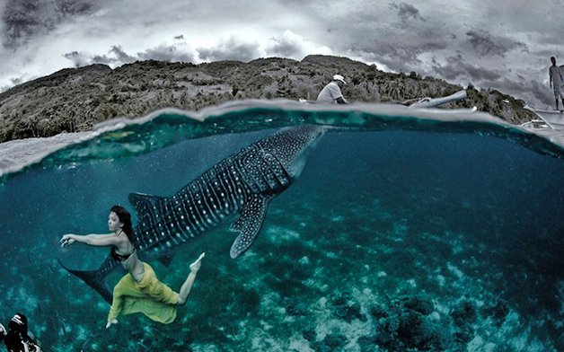 WhaleSharks8