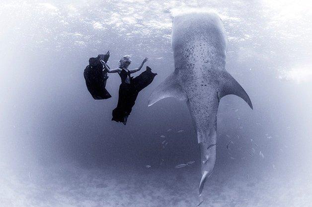 WhaleSharks9