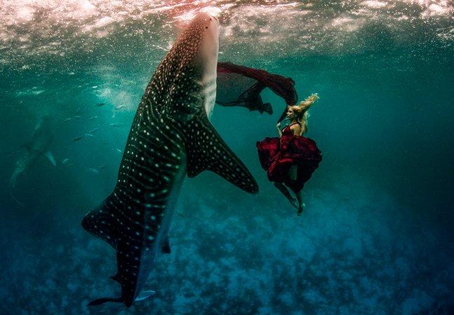 Ensaio feito ao lado de tubarões baleia com mais de 10m de comprimento