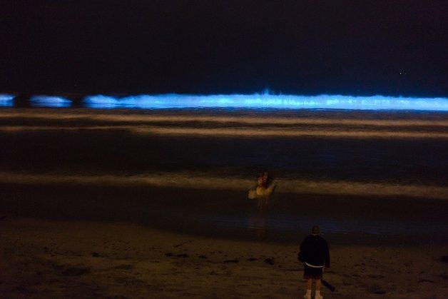 Bioluminescenceflickr.com