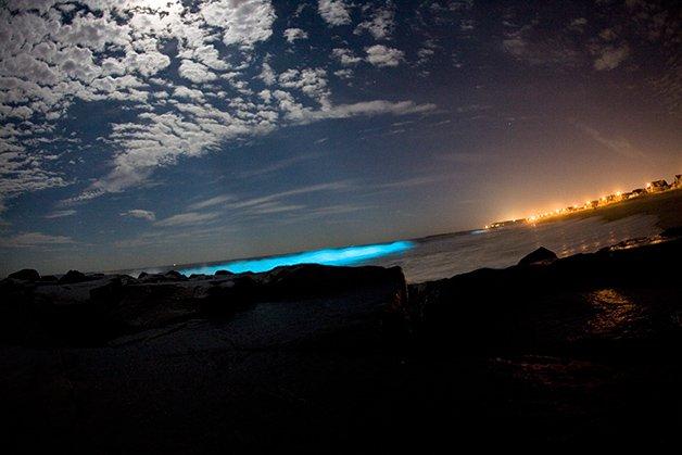 Bioluminescencia_unleashed.org.au