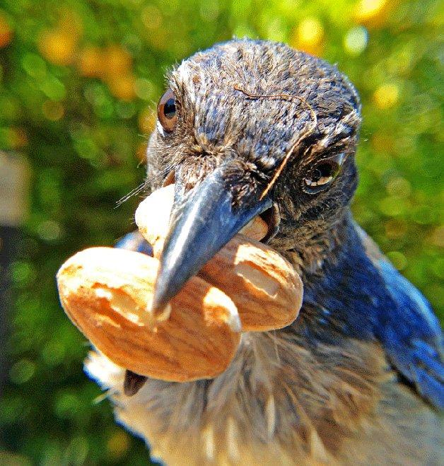 BirdPhotoBooth4