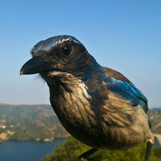 BirdPhotoBooth7