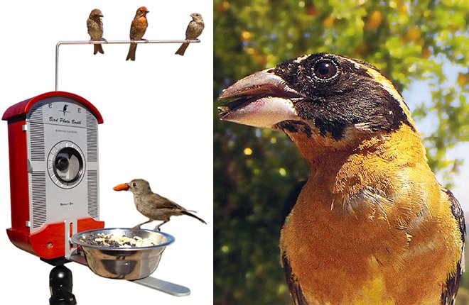 Comedouro inovador permite gravar e fotografar pássaros de perto como nunca