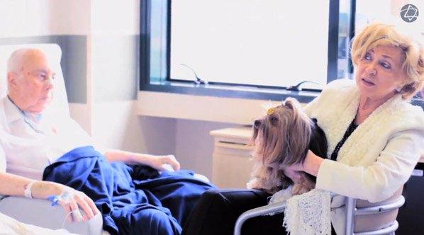 Hospital Albert Einstein libera a visita de bichos de estimação para pacientes