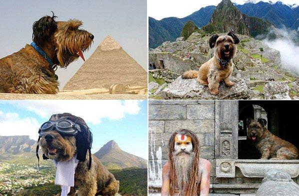 Cão resgatado de abrigo vira viajante em uma série de fotos ao redor do mundo