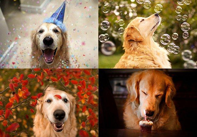 Garota fotografa seu cão diariamente e capta nas fotos a essência feliz dos cães