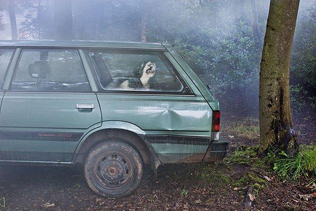 DogsinCars2