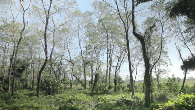 forest_man5