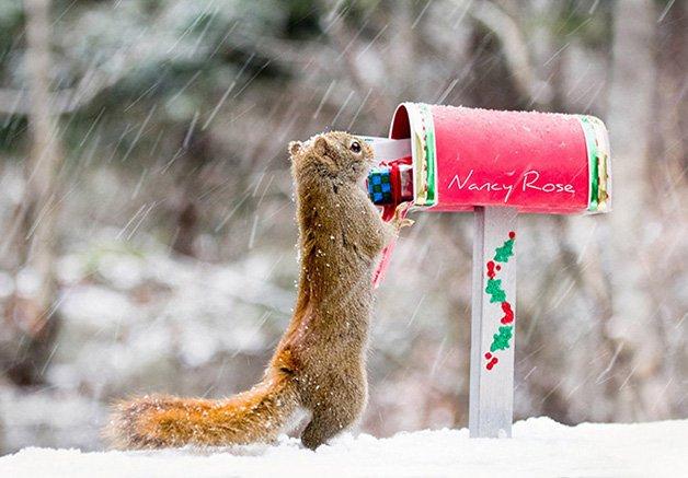NancyRoseSquirrels1
