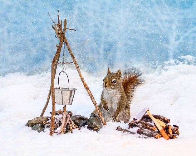 NancyRoseSquirrels10